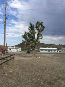 Joshua Tree en Dolan Springs. Camino del Gran Cañón
