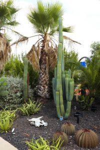 Cactus en Tabernas. Desert City