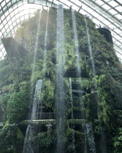 Cloud Forest. gardens by the bay