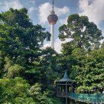 KL Forest Eco Park. qué ver en Kuala Lumpur