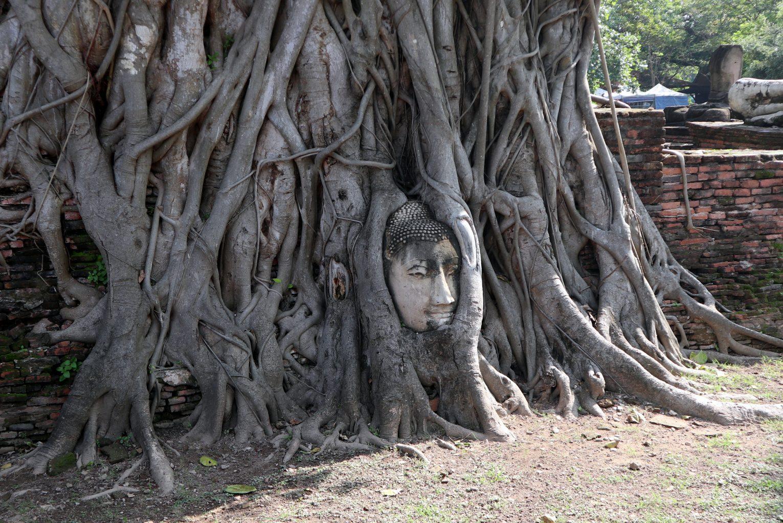 Cabeza de buda en raíces de árbol en Wat Mahathat . mercado del tren, el mercado flotante y ruinas de Ayutthaya
