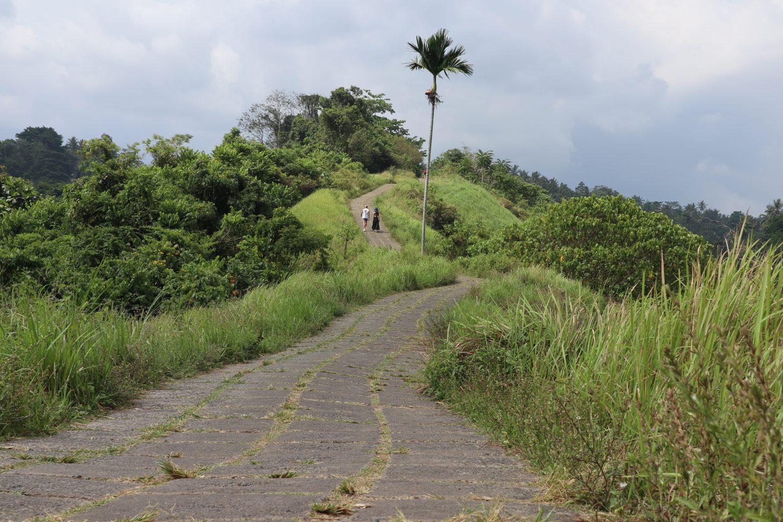 Campuhan Ridge Walk. qué ver en Ubud