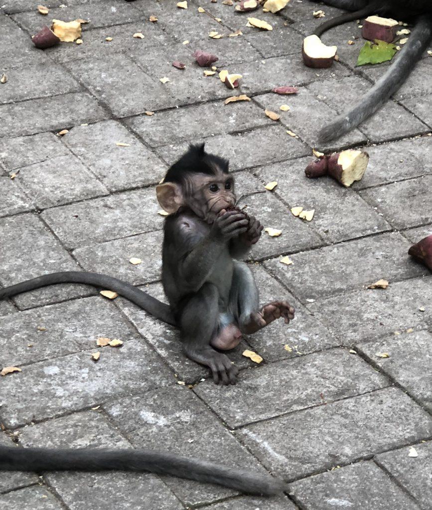 Mono bebé. Ubud Monkey Forest