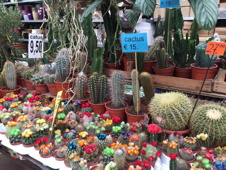 Venta de Cactus en el mercado de las flores. Qué ver y hacer en Ámsterdam.