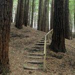 Zona de escaleras. Bosque de Secuoyas del monte Cabezón