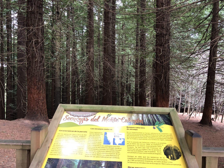 Panel informativo en la zona central. Bosque de Secuoyas del monte Cabezón