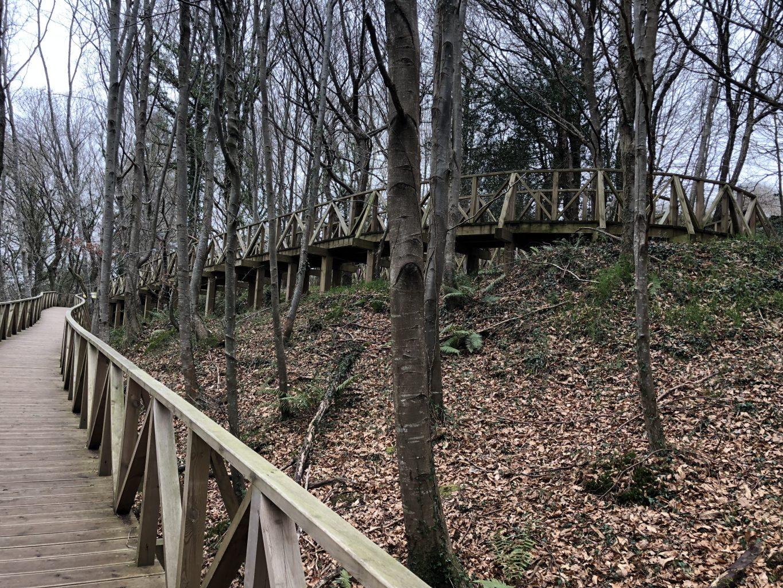 Pasarela de acceso al bosque. Bosque de Secuoyas del monte Cabezón