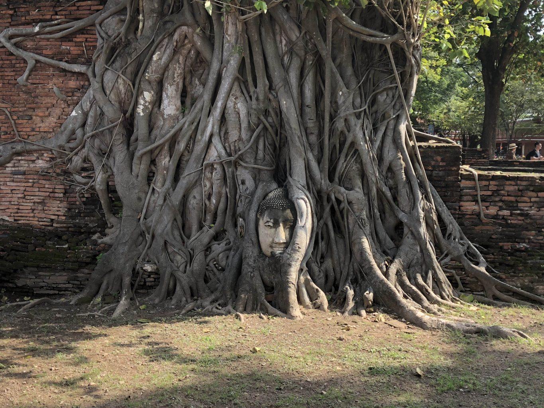 Cabeza de buda en raíces de árbol en Wat Mahatha. ruinas de Ayutthaya
