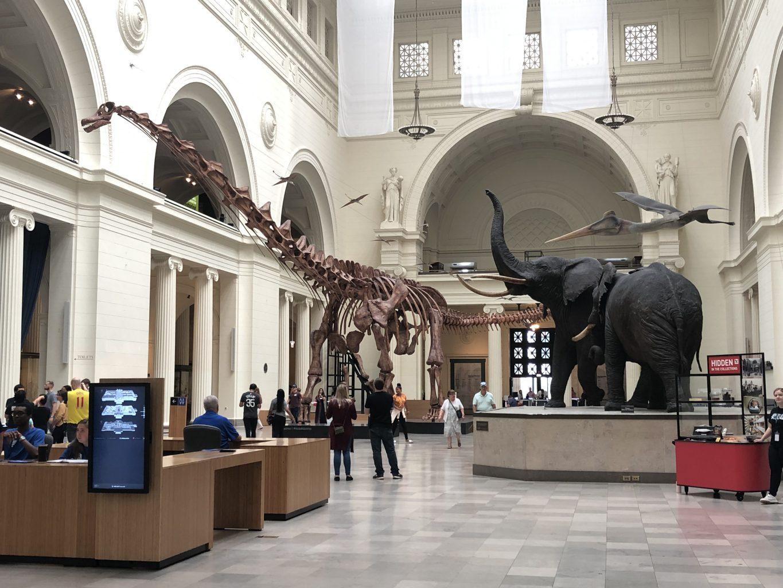 Hall del Field Museum. qué ver y hacer en Chicago