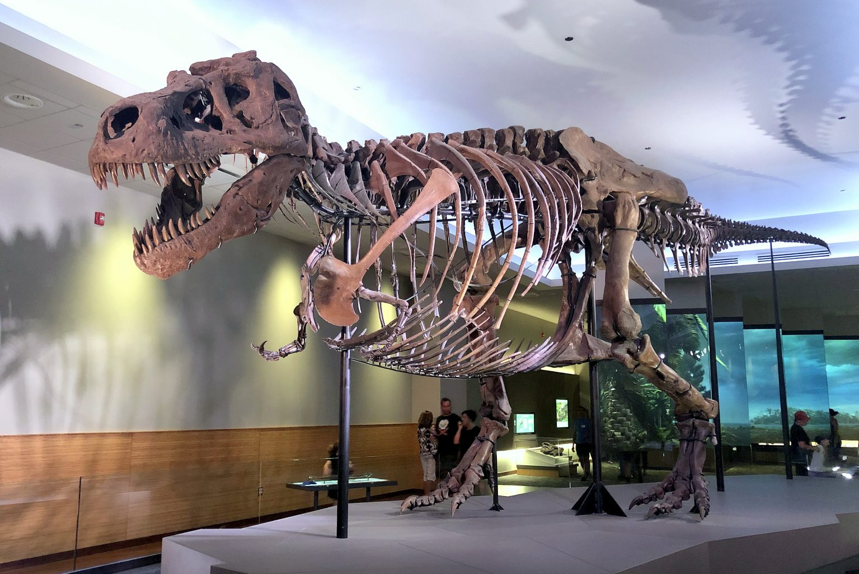 Sue, el Tyrannosaurus Rex. Field museum