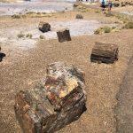Madera petrificada. Visitar el Petrified Forest