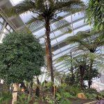 Plantas del Sky Garden