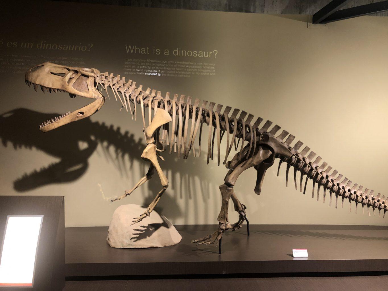 ¿Qué es un dinosaurio?. Visitar el Museo Jurásico de Asturias