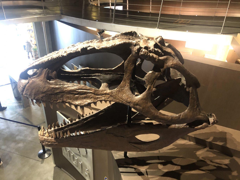 Cabeza de dinosaurio. Visitar el Museo Jurásico de Asturias