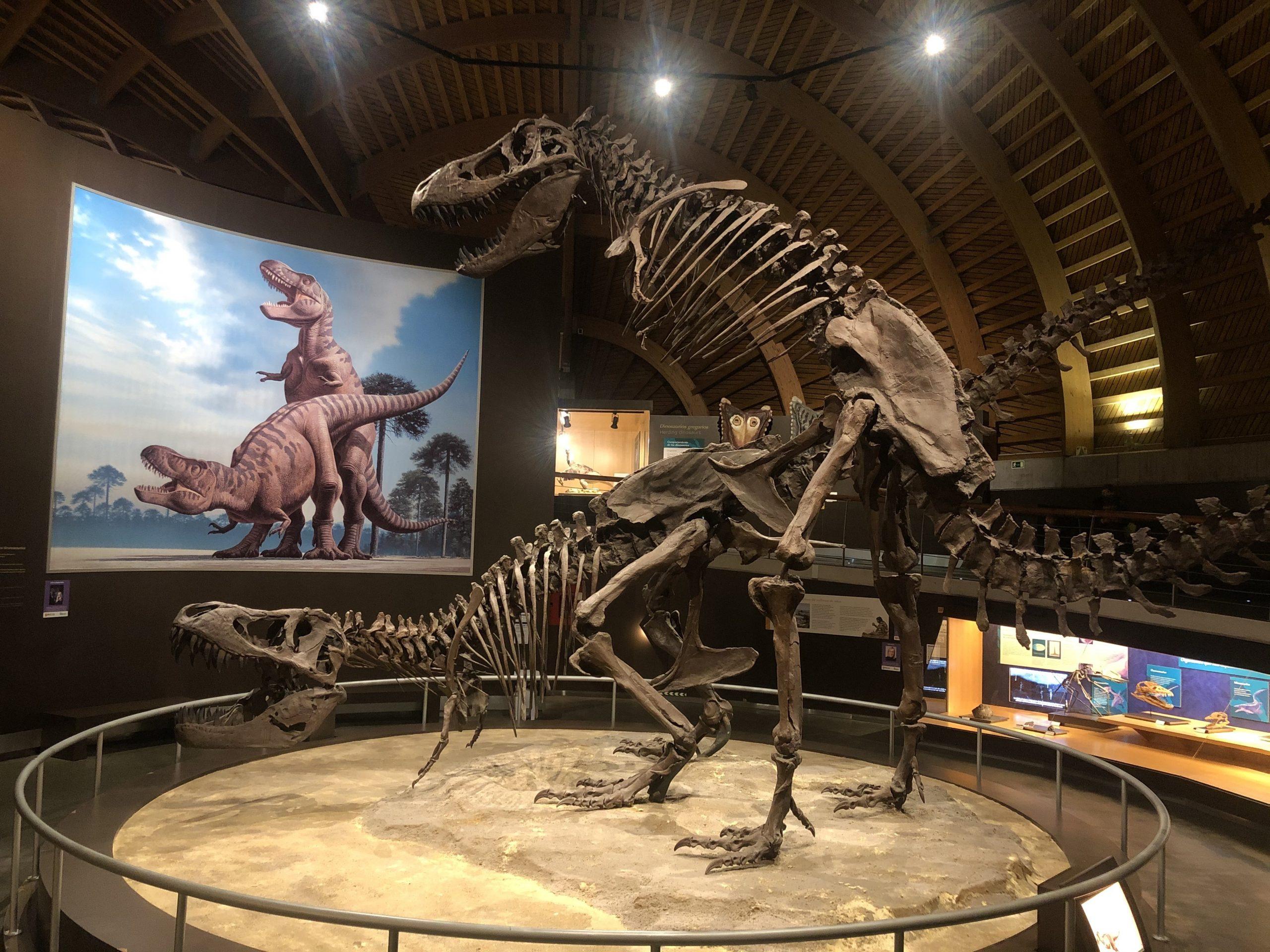 pareja deTyrannosaurus Rex. Visitar el Museo Jurásico de Asturias